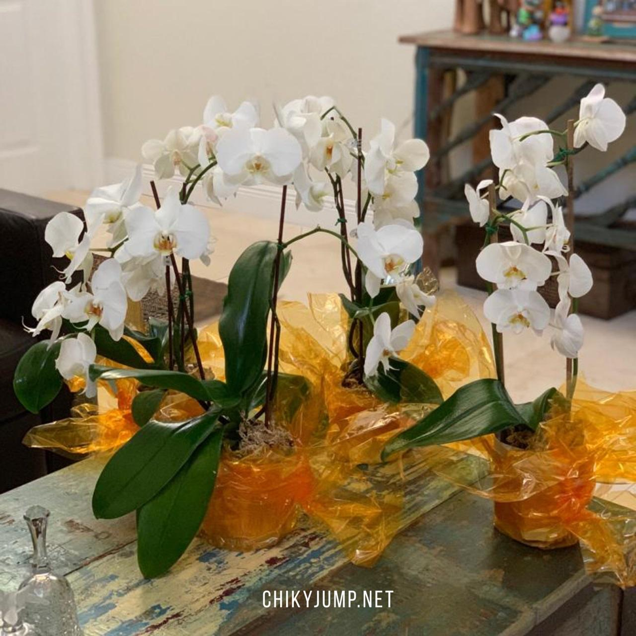 Orchids Centerpieces, Party Decorations